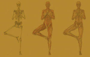 bewegingsleer-en-yoga