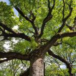 lezing-Hoe-bomen-verbinden-maja-kooistra